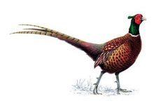 Pheasant Preserve